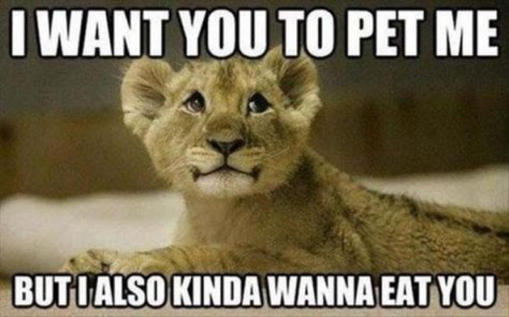 pet me lol