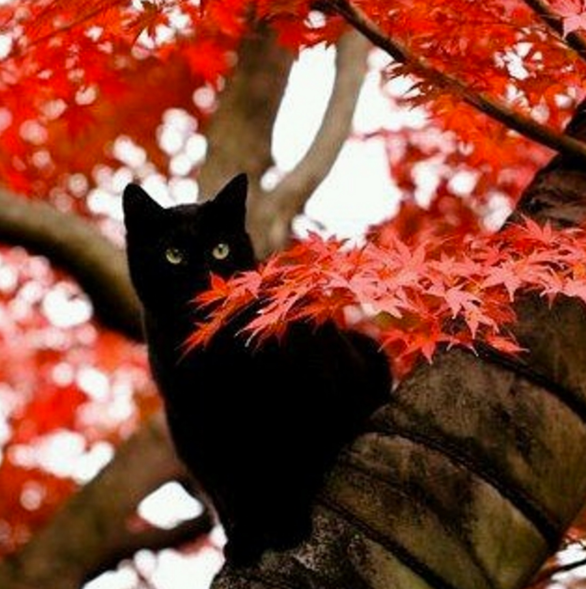 autumn kitty 1