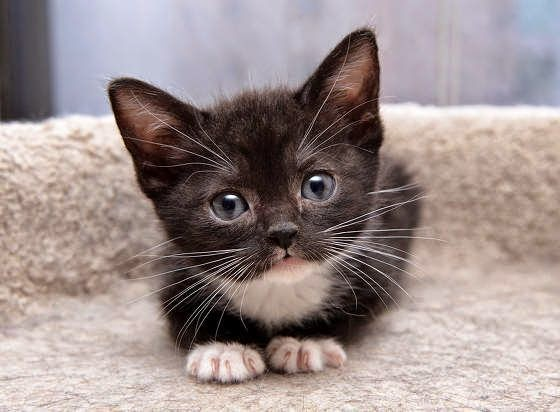 Image result for kitten named Lily