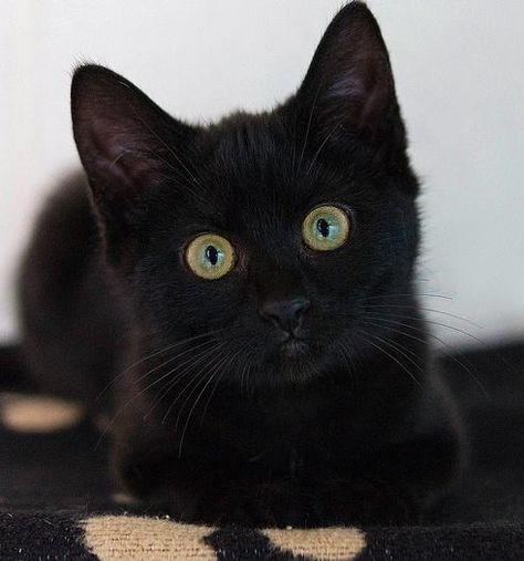 black stare