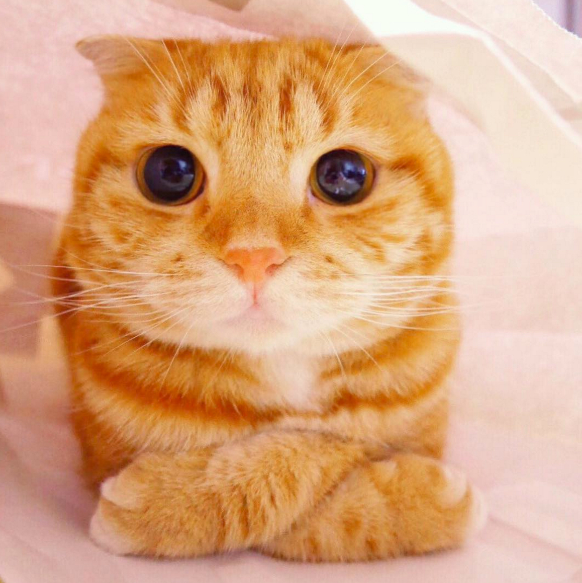 ginger big eyes
