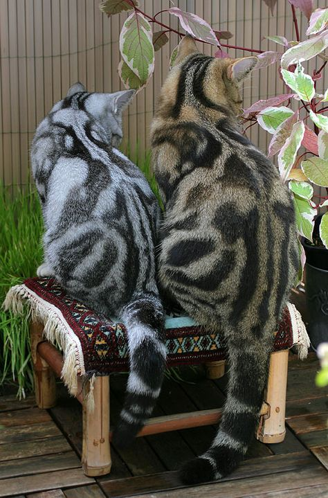 incredible markings