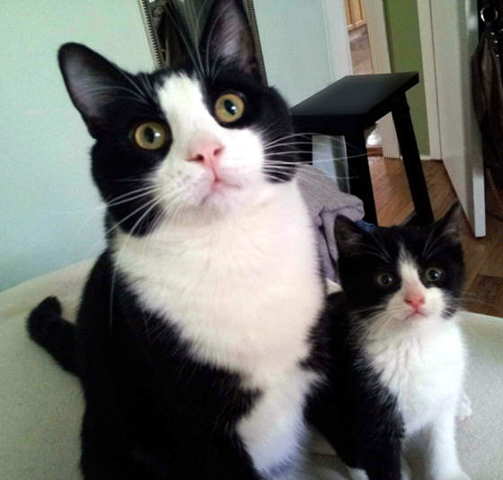 30 great pictures of cats with their mini me we love