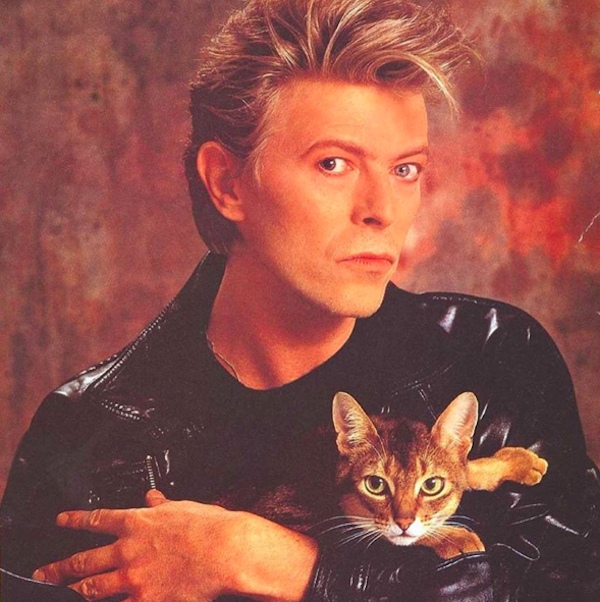 BowieCats1