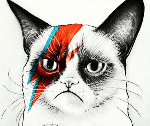 BowieCats4
