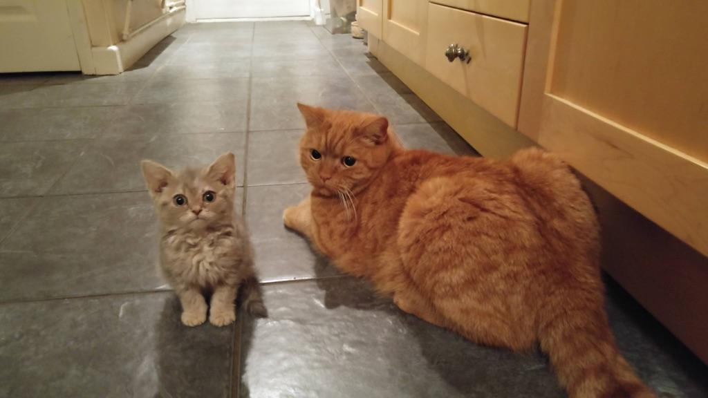 Garfield and Nermal!!