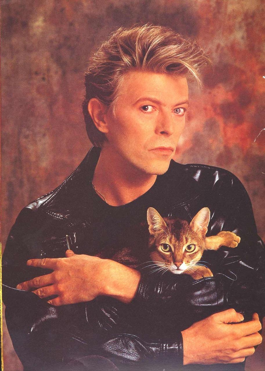 david with cat