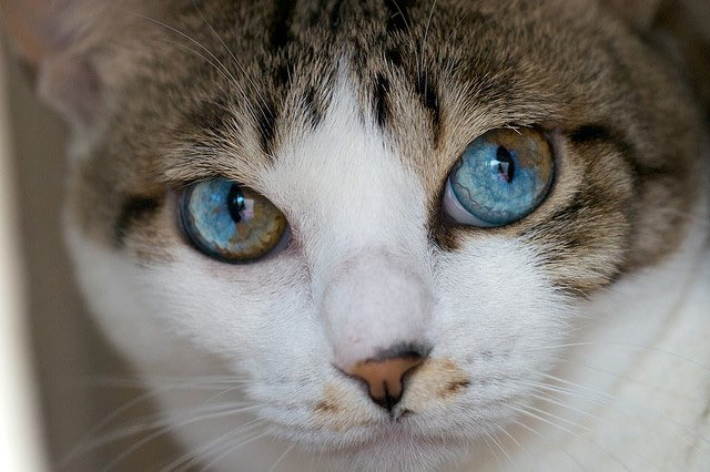 How To Tell If Your Cat Has Healthy Eyes