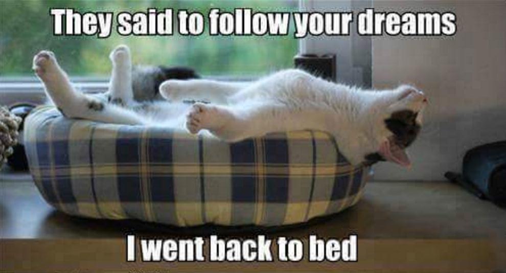follow your dreams lol