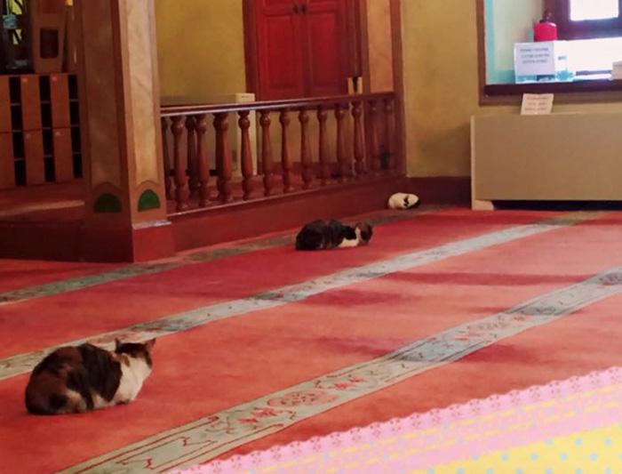 mosque 6