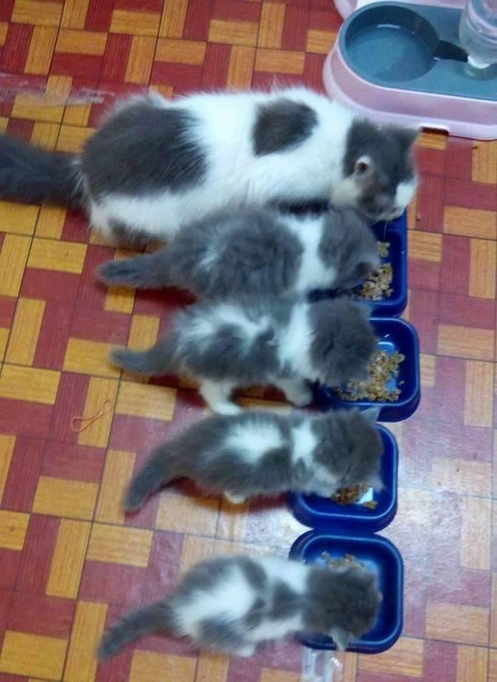 5 feeding
