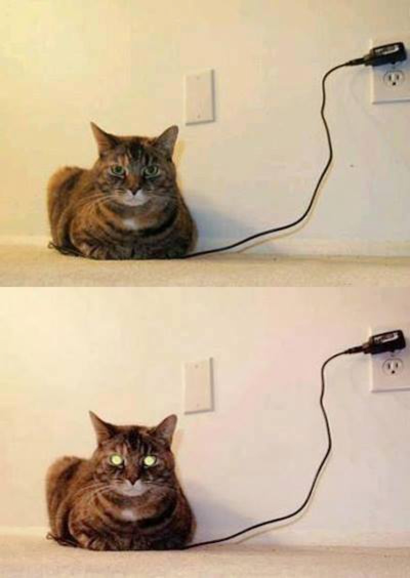 How to know when your cat is fully charged.
