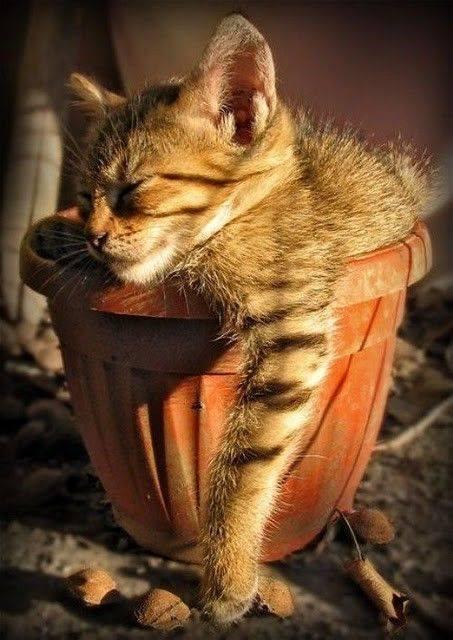 chillin' in my pot...