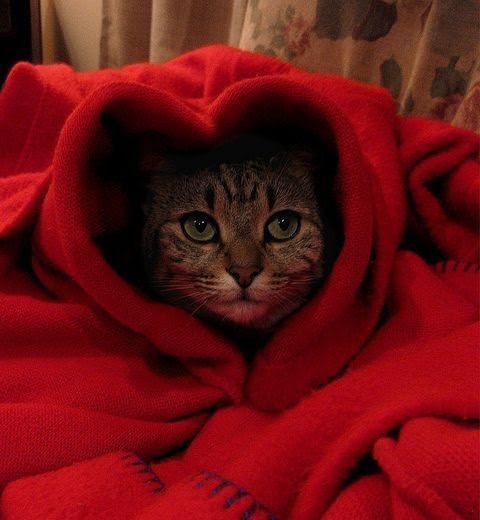 valentine blanket