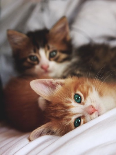 2 kittens green eyes