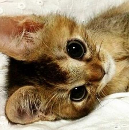 Iz I cute?