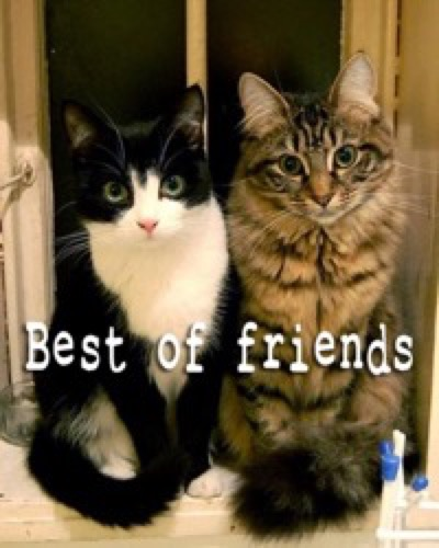 best of friends copy 4