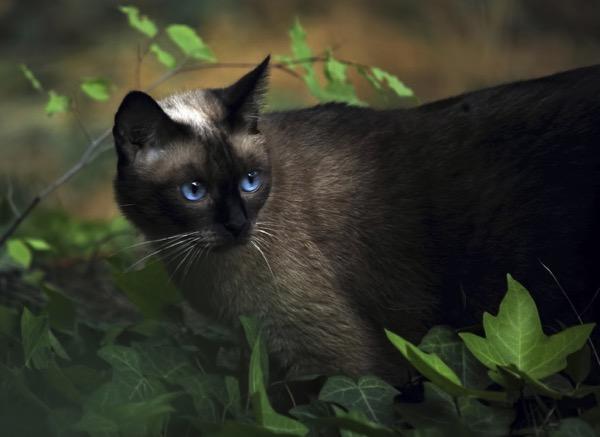 blue eyes copy 3