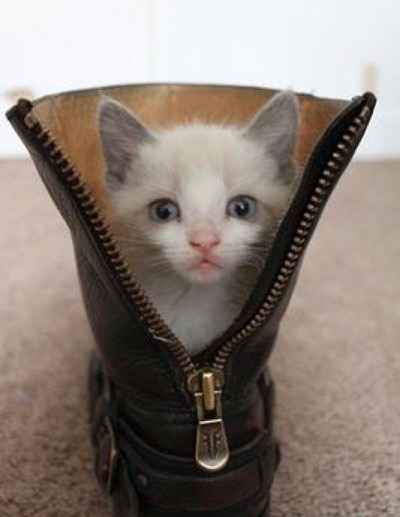 boot with zip