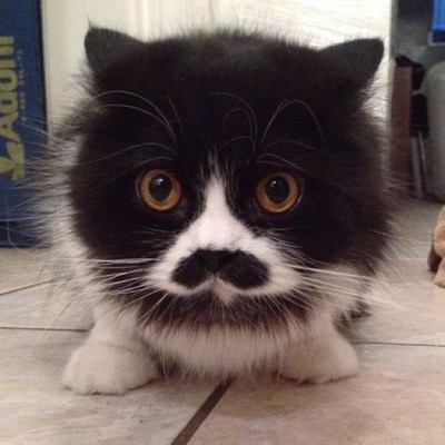 cuteness moustache