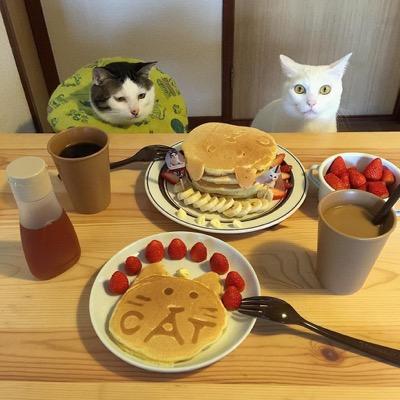 food envy 11