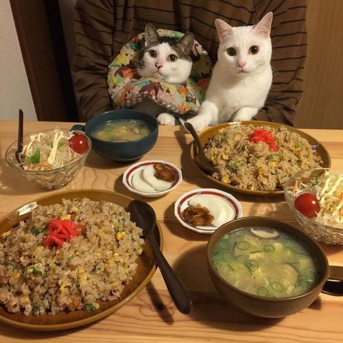 food envy 12