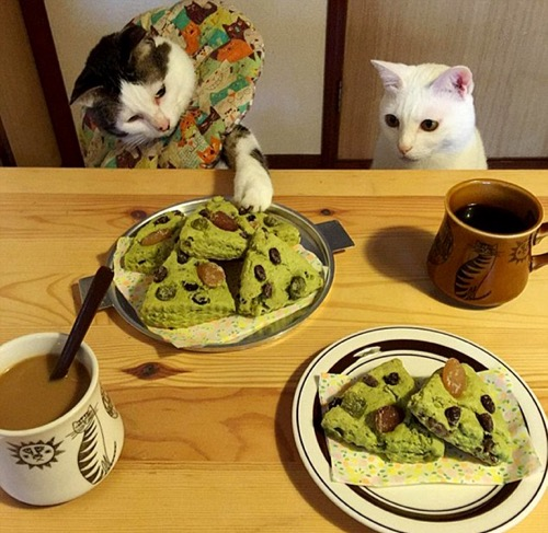 food envy 4