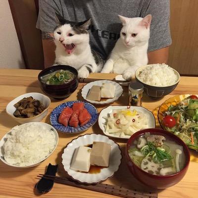 food envy 7