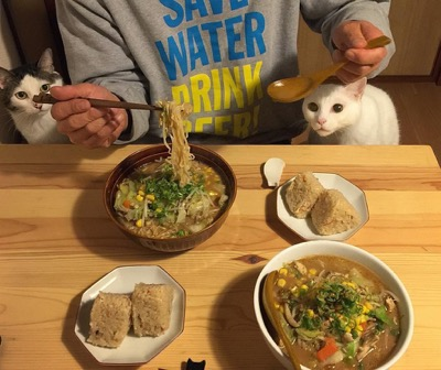 food envy 8