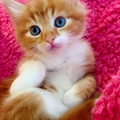 ginger cutie copy
