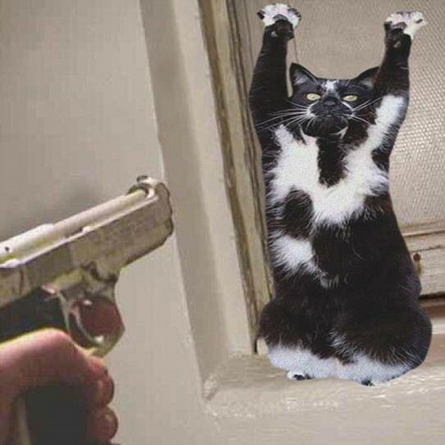 goal kitty 10