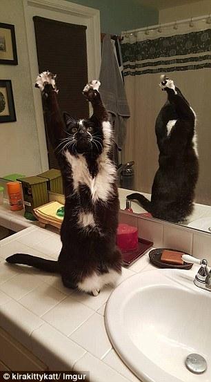 goal kitty 2