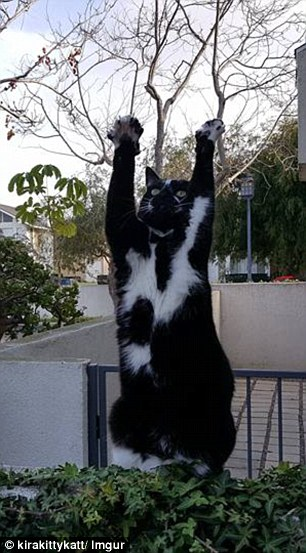 goal kitty 3