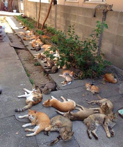 grow catnip.
