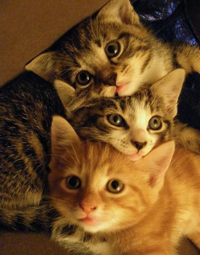 kitten stack 2