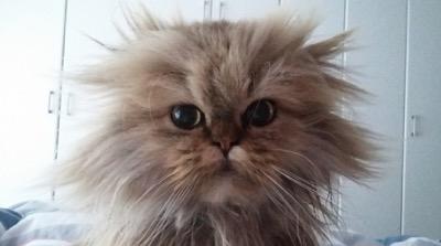 name this cat