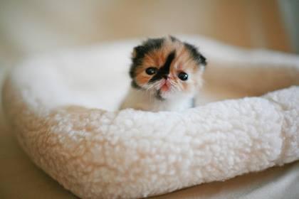 teeny tiny kitten......