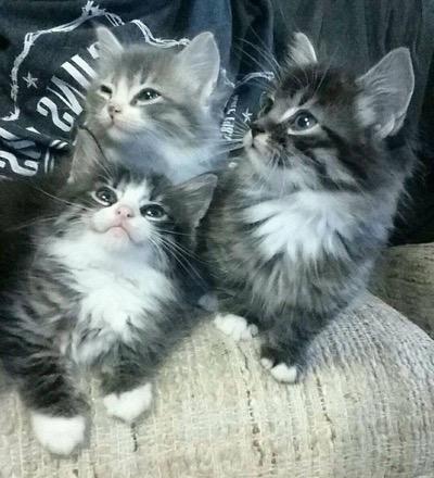 3 little cuties