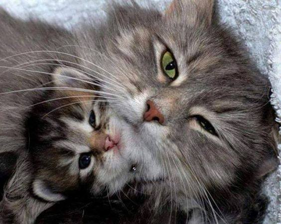 adorable mama and baby