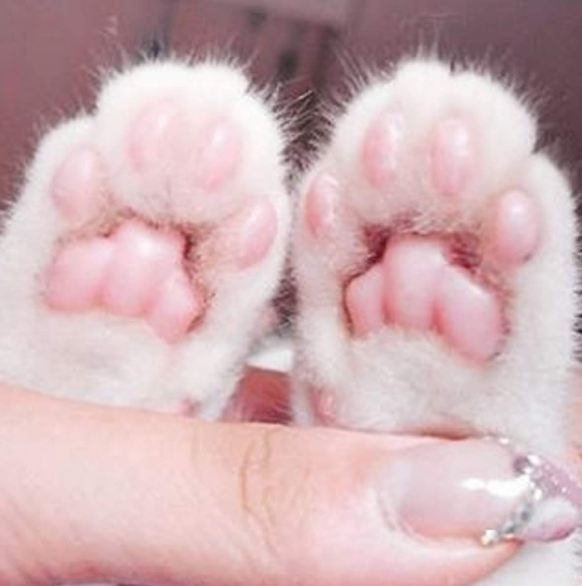 awesome paws