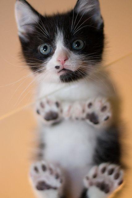 cute toes kitten
