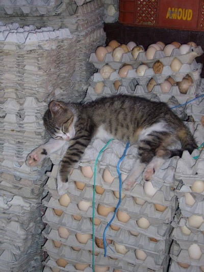 egg-hausted