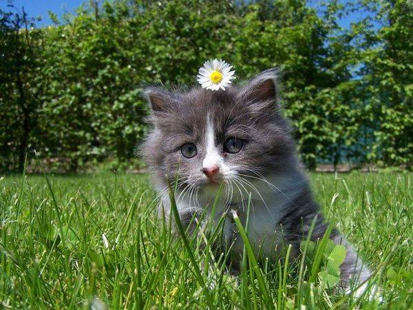too cute daisy