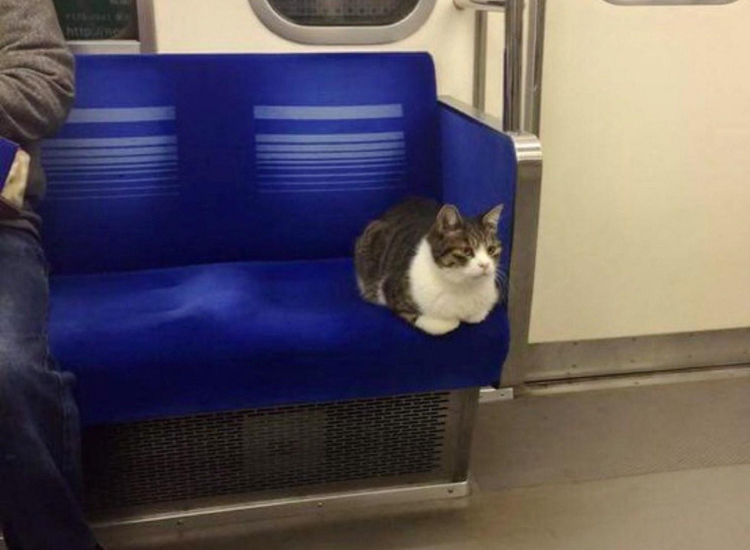train cat 1