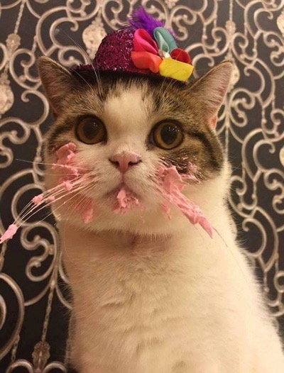 Cat Eating Cake On His Birthday Is Adorable