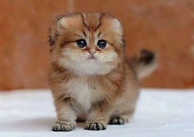little fella