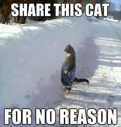 share this cat lol