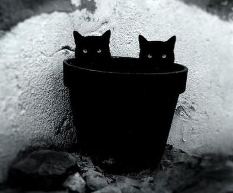 2 black in pot