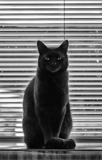 black cats rule copy 2
