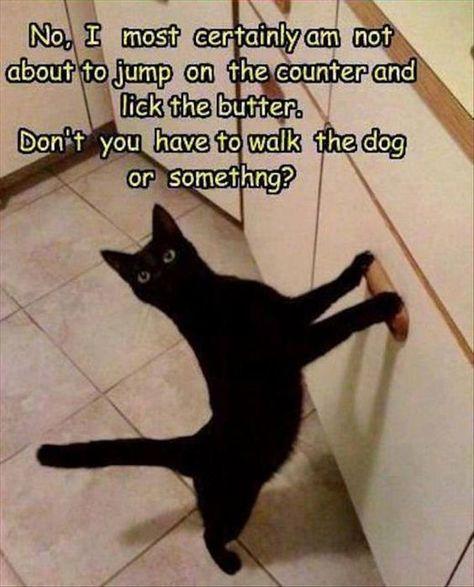 counter lol